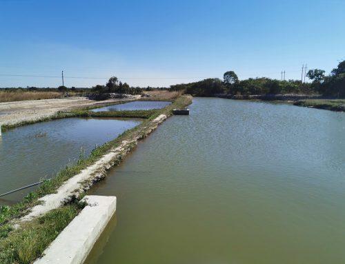 Fish Farming with Solar